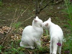 cat050813