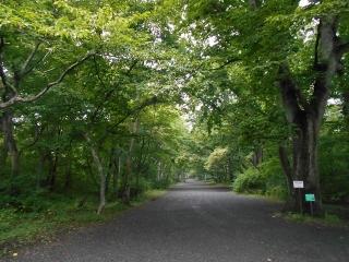 Teitena200910